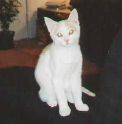 Skitty kitty