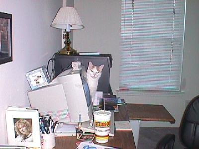 Spanky on Desk