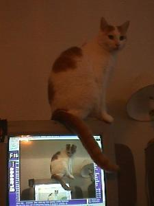 spanky on monitor