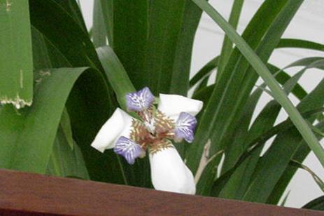 plant pic